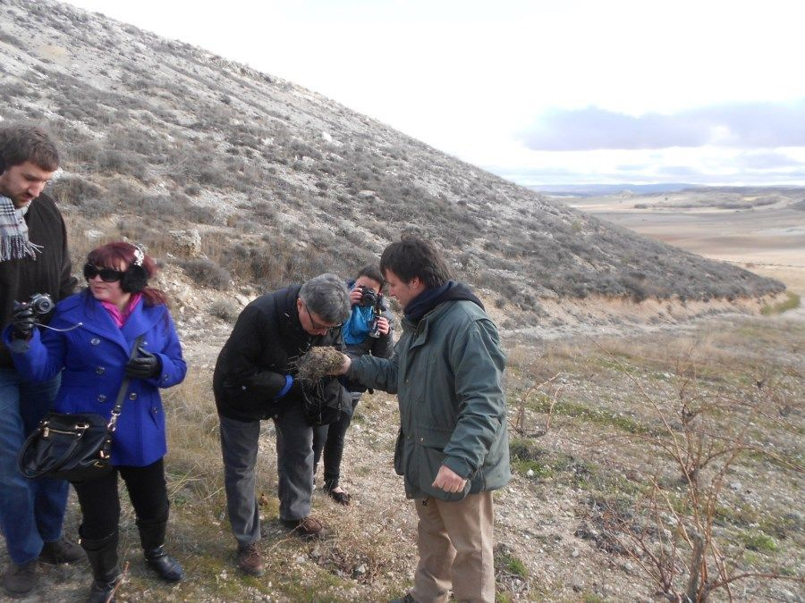 Bodegas Kirios en el viñedo