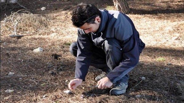 Picking musrooms